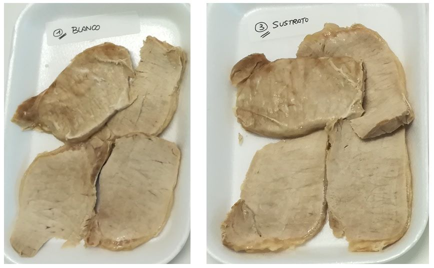 Comparison between sample 1 cooked loin and brine 3 cooked loin (substrate). Both look pale due to not using nitrites or starters